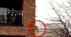 """Il cane deve fare pipì, lui lo appende al balcone: """"Troppo freddo, non volevo uscire"""""""