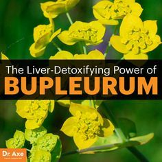 6 Benefits of Bupleurum, Including Liver Detox & Cancer Fighting - Dr. Axe