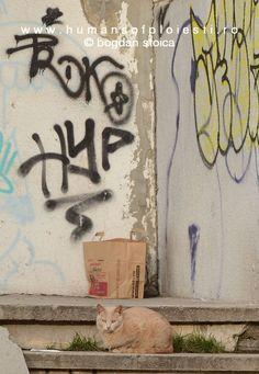 Humans of Ploiesti Neon Signs