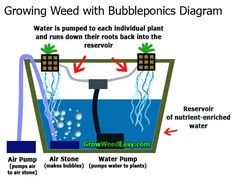 This diagram shows you the major components of any bubbleponics system. This diagram shows you the m Growing Weed, Cannabis Growing, Growing Plants, Farming System, Hydroponics System, Foods To Balance Hormones, Floating Raft, Organic Nutrients, Hydroponic Plants