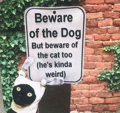 Cat And Dog Memes, Dog Jokes, Funny Dog Memes, Funny Animal Memes, Funny Relatable Memes, Cat Memes, Funny Animals, Pokemon Memes Funny, Funny Dog Signs