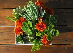 succulents and mums