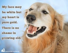 930 Best Dog Quote Inspiration images in 2018 | Dog quotes