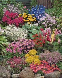 Photo La collection de 12 plantes vivaces