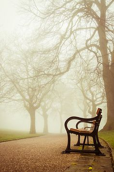 A bench alone in the fog