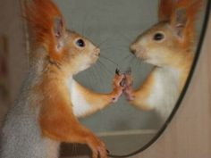 mirror squirrel