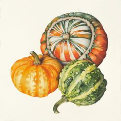 Awarded a Silver RHS Medal in 2008 as part of a group exhibit by The South West Society of Botanical Artists titled Spots and Stripes.
