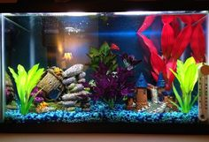 My ten gallon freshwater tank In there somewhere are my male Veiltail betta Sriracha and my African dwarf frog Darwin