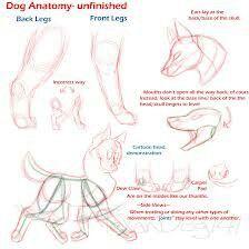 Dog cartoon moves