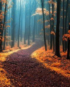 Fall In Hallerbos Forest, Belgium