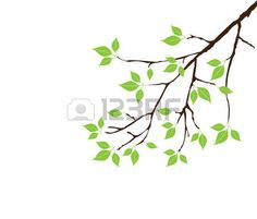 tree branch with leaves vector. vector tree branch with leaves photo