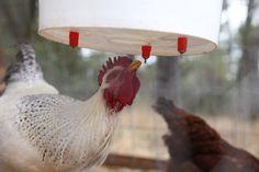Chicken Nipple Waterer