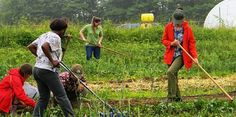 Our heroes at The Seed Farm help build the next generation of sustainable farmers, providing new farmer training and agricultural business incubator programs in Pennsylvania's Lehigh Valley.