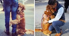 This Retriever Is Obsessed With Giving Hugs To Everyone He Meets   Bored Panda