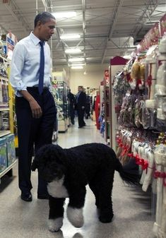 The President shopping for pet toys with Bo at petsmart