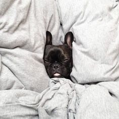 Five more minutes, please! This was me this morning!! LOL