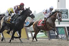As I'll Have Another vies for the first Triple Crown Saturday at the Belmont Stakes, TIME looks back at the 11 horses that have shot for similar stardom since the last Triple Crown winner in 1978 — and fallen just a few lengths short. Barrel Racing Saddles, Barrel Racing Horses, Horse Racing, Race Horse Breeds, Clydesdale Horses, Breyer Horses, The Belmont Stakes, Western Pleasure Horses, Derby Horse