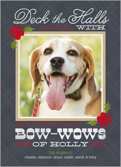 Woof! Woof! Happy holidays from the furry friend. Bow Wow Holly 5x7 Photo Card by Shutterfly | www.Shutterfly.com