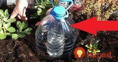 Geniálny pomocník do záhrady: Tento trik vám ušetrí množstvo vody a rastlinky porastú ako divé!