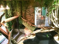 Giant Zoo Enclosure Terrarium for my Asian Water Monitor, Sidney - jasmin Reptile Rescue, Reptile Zoo, Reptile House, Reptile Cage, Reptile Enclosure, Terrariums, Terrarium Reptile, Les Reptiles, Amphibians