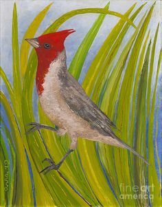 Red-crested Cardinal  by Anna Skaradzinska