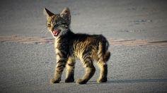 Mérges macska | Fotó via boredpanda.com