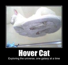Google Image Result for http://3.bp.blogspot.com/_gTJMEP-c2fo/SgszfNqNAKI/AAAAAAAAMcc/O6TG3ZlwS-Q/s400/hover-cat-3.jpg