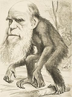 From Wikiwand: As evolution became widely accepted in the 1870s, caricatures of Charles Darwin with an ape or monkey body symbolised evolution.[324]