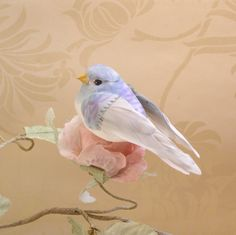 little birdy...