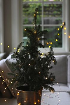 elorablue:  The Perfect Apartment Christmas Tree   By...