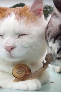 Cats Lounge With A Snail - While lounging outside, a snail happens upon a pair of kitties and decides to hang out on one of the cat's paws.