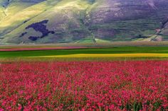 Castelluccio is a village in Umbria, in the Apennine Mountains of central Italy.