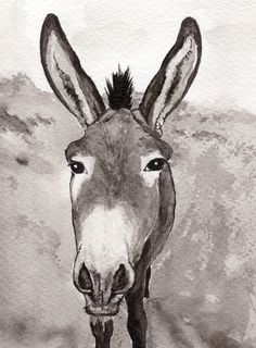Ormer the Guernsey donkey, Indian ink painting on Fabriano, 2012