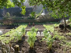 The picture shows the original use for Bell jar cloches , an old English gardening method.   Ben Pentreath Ltd