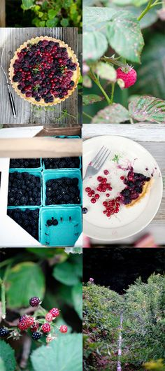 berry yogurt popsicles berry tart foraged berry tart mixed berry ...