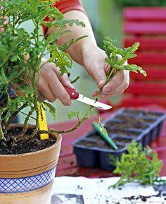 Les bons gestes du jardinier en septembre
