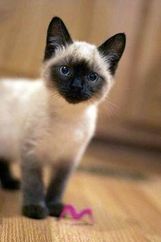 ¿Eres #CatLover? Visita mi blog http://ayudafelina.blogspot.com