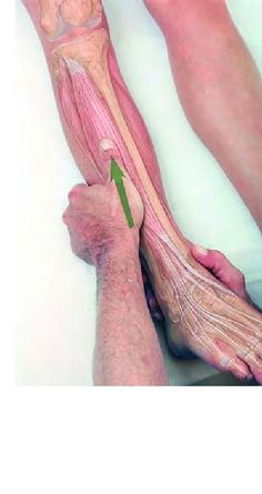 The Anterior Tibialis muscle is a primary ankle dorsiflexor which lifts the toes up. This muscle is strained during prolonged walking and can be releived with myofascial release and acupoint therapy. Message Therapy, Sports Therapy, Trigger Point Therapy, Reflexology Massage, Massage Tips, Sports Massage, Physical Therapist, Clothing Accessories, Religion