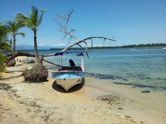 Panama -Boca del drago