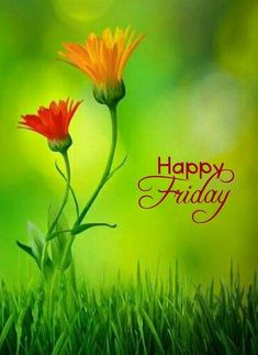 Good Friday Images 2020 - Happy Friday Images With Quotes -Easter Friday Images Pictures Friday Morning Quotes, Good Morning Friday, Its Friday Quotes, Friday Humor, Funny Friday, Night Quotes, Good Friday Images, Friday Pictures, Morning Pictures