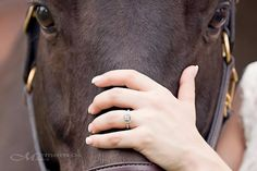 Horse engagement photo