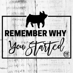 I need to remember this more and not get caught up in the politics! Livestock Judging, Showing Livestock, Live Stock Quotes, Quotes For Shirts, Show Steers, Pig Showing, Show Goats, Teacup Pigs, Show Cattle