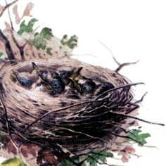 Baby Birds Image with Nest!
