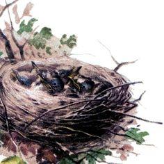 Baby Birds Image with Nest!