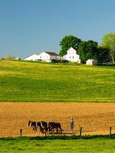 Farmers at work...  Horse-drawn plows are a common sight in Amish country.