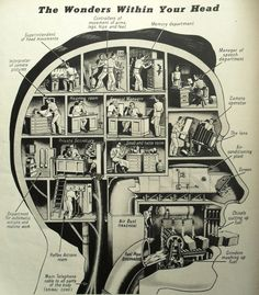 The wonders Within Your Head - This infographic provides a visual to show how the different parts of the brain function. The infographic illustrates the brains nose and throat functions in Lamen's terms so that it is clear to the reader Effective Leadership, Psy Art, Your Head, Your Brain, The Human Brain, Anatomy, Mindfulness, Science, Pictures