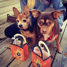 Treat bags from Rocky & Maggie's Pet Store. 10/17/12