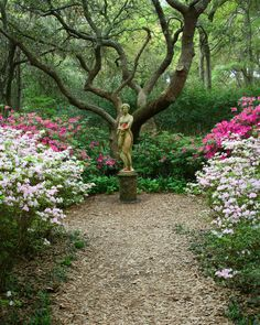 Formal statue on plinth in a woodland garden. Perfect mix.