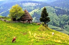 apuseni natural park - Recherche Google Natural Park, Mountains, House Styles, Travel, Google, Romania, Houses, Farms, Rural Area