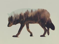 Norwegian visual artist Andreas Lie merges verdant landscapes and photographs of animals to creates subtle double exposure portraits. Snowy mountain peaks and thick forests become the shaggy fur of wolves and foxes, and even the northern lights appear through the silhouette of a polar bear. Lie is